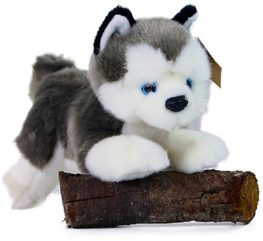 PLYŠ Pes husky 20cm ležící Eco-Friendly *PLYŠOVÉ HRAČKY*